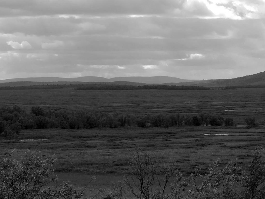 Land der Wald und Tundrasamen